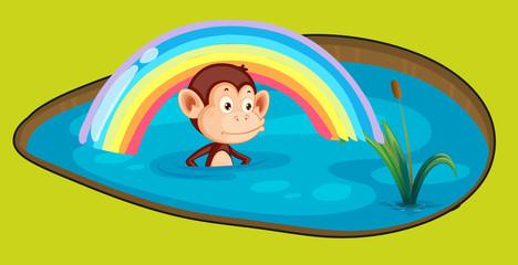 Monkey in a bath