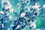 natural macro floral background - 74060788