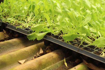 Germination is the new life of green seedlings.