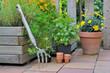 plantes aromatiques en terrasse