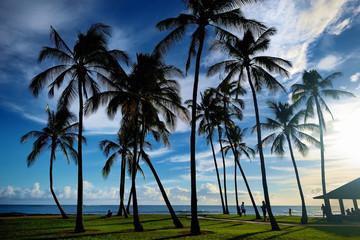 Sunrise with palm trees in Salt Pond Beach Park