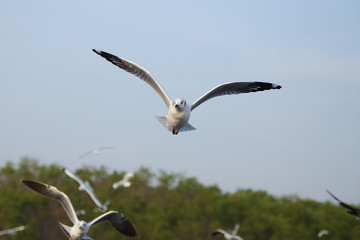 Seagull flying under the sky