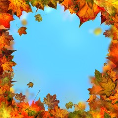 maple leaves, autumnal frame, golden autumn