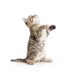 Little striped  kitten looking up