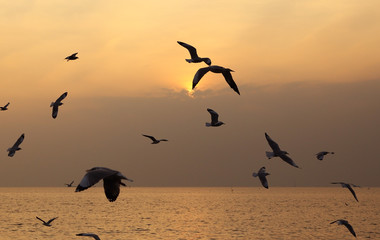 Seagull with sunset