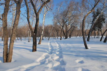 Winter Siberian forest, Omsk region