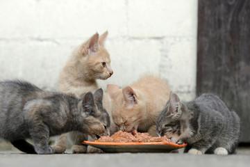 Kätzchen am fressen