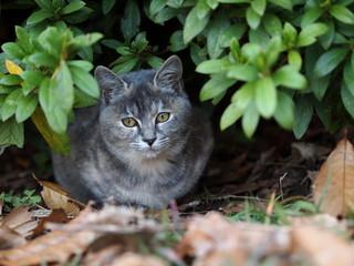 茂みに潜む仔猫