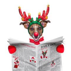 dog reading newspaper