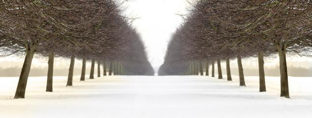 Snowy avenue of trees in winter