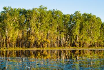 Sandy Billabong, Kakadu, Northern Territory, Australia