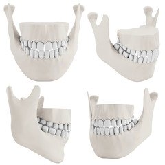 3d human jaw bone closed with teeth collection