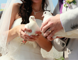 Two white doves. Wedding