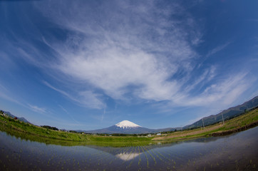富士山と田んぼと空と雲