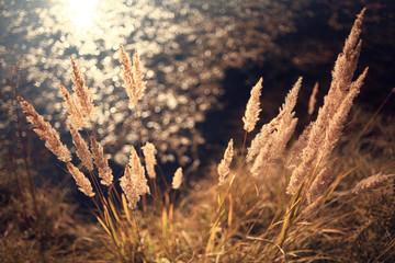 Autumn dry grass background texture