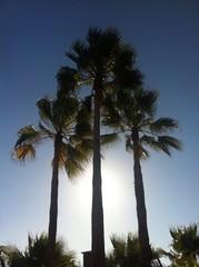 Tres palmeras