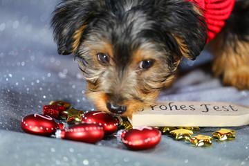"""Hund mit Schild """"Frohes Fest"""""""
