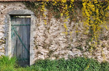 mur en pierre et végétation