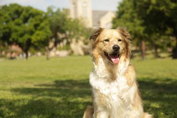Portrait of Dog, Man's Best Friend