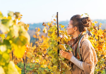 Young woman smelling leafs in autumn vineyard