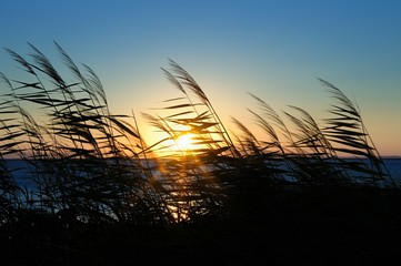 End of day at reeds-Sunset on the beach