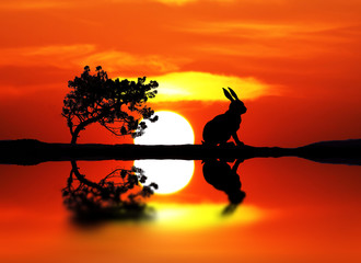 el conejo solitario