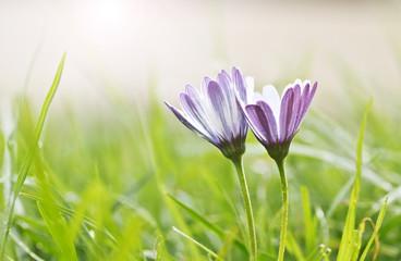 flores en el cesped