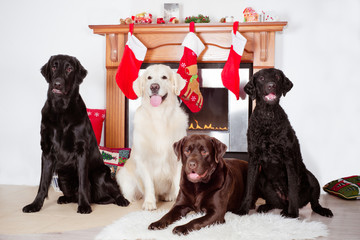 group of dogs by a fireplace decorated for christmas