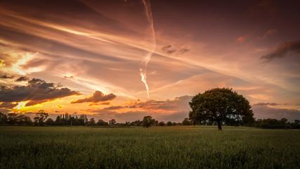 Bulkington Crop Fields