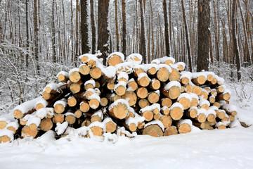 logs under snow