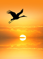 Stork silhouette at sunset