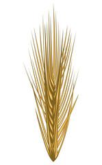 Golden ear of wheat