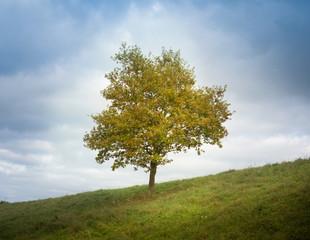 arbre seul campagne