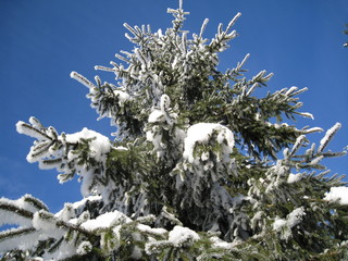 L'albero di Natale è