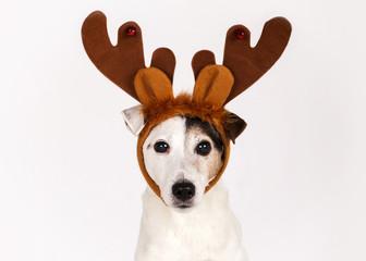 Chien renne de Noël