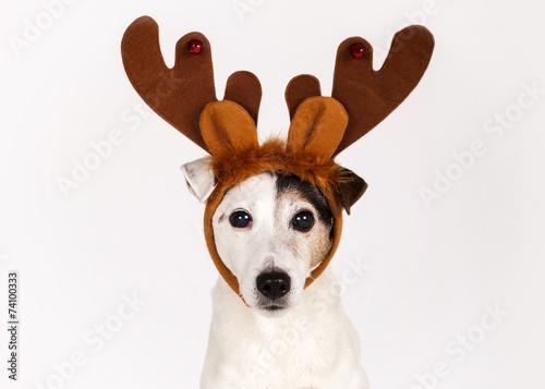 Staande foto Hond Chien renne de Noël