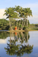 Fairchild Tropical Gardens - landscape