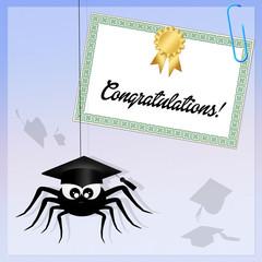spider graduate