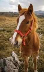 Horses, Guadamia, Asturia y Cantabria, Spain