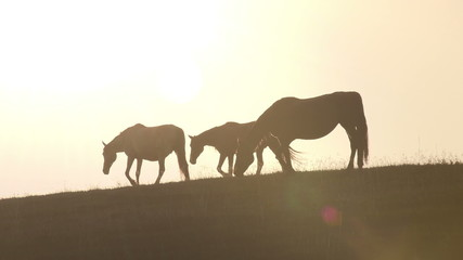 Horses against backlight