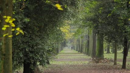 Camminando nel parco delle Cascine a Firenze