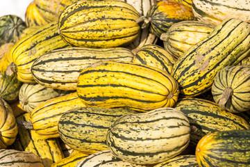 Delicata sweet Potato cucurbita pumpkin pumpkins from autumn har