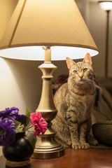 Cat in a Lamp