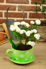 Flowers in pot, potting soil, watering can and plants