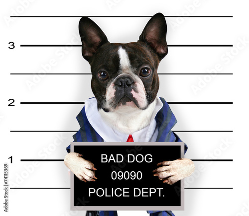 Foto Spatwand Hond a mugshot of a bad dog