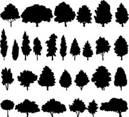 set of different deciduous trees