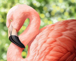 A beautiful flamingo