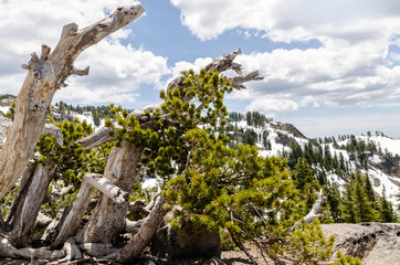 Scorched trees along the trail to Lassen Peak