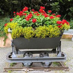 interesting flower bed in the trolley