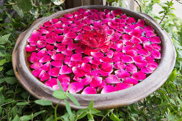 red rose petal floating water in bowl basin